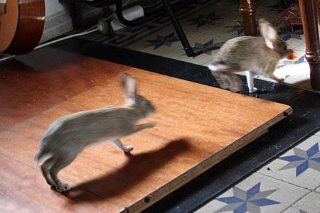 conejo_20080523_2.jpg