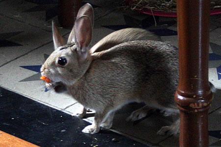 conejo_20080523_3.jpg
