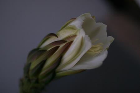 flor_cactus_20100730_2.jpg