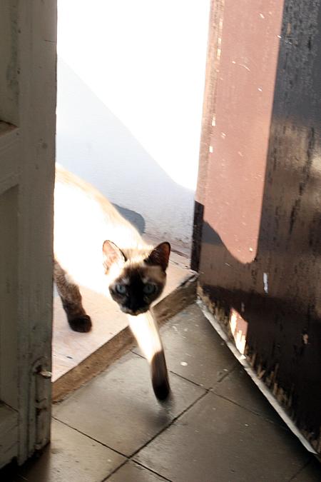 gato_1.jpg