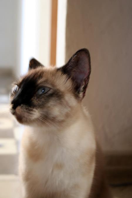 gato_4.jpg