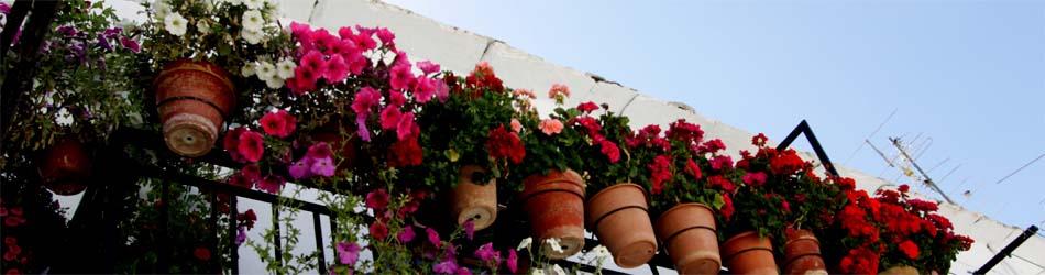 花の咲く白い家